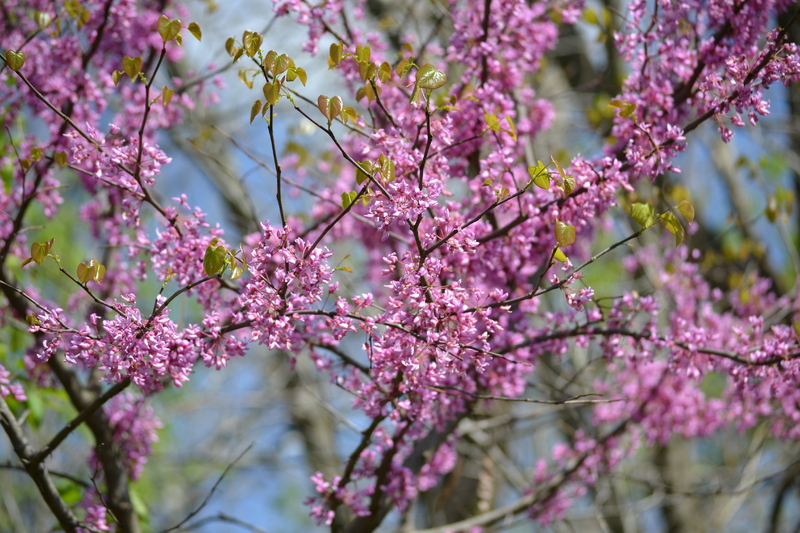 Busy Blossoms